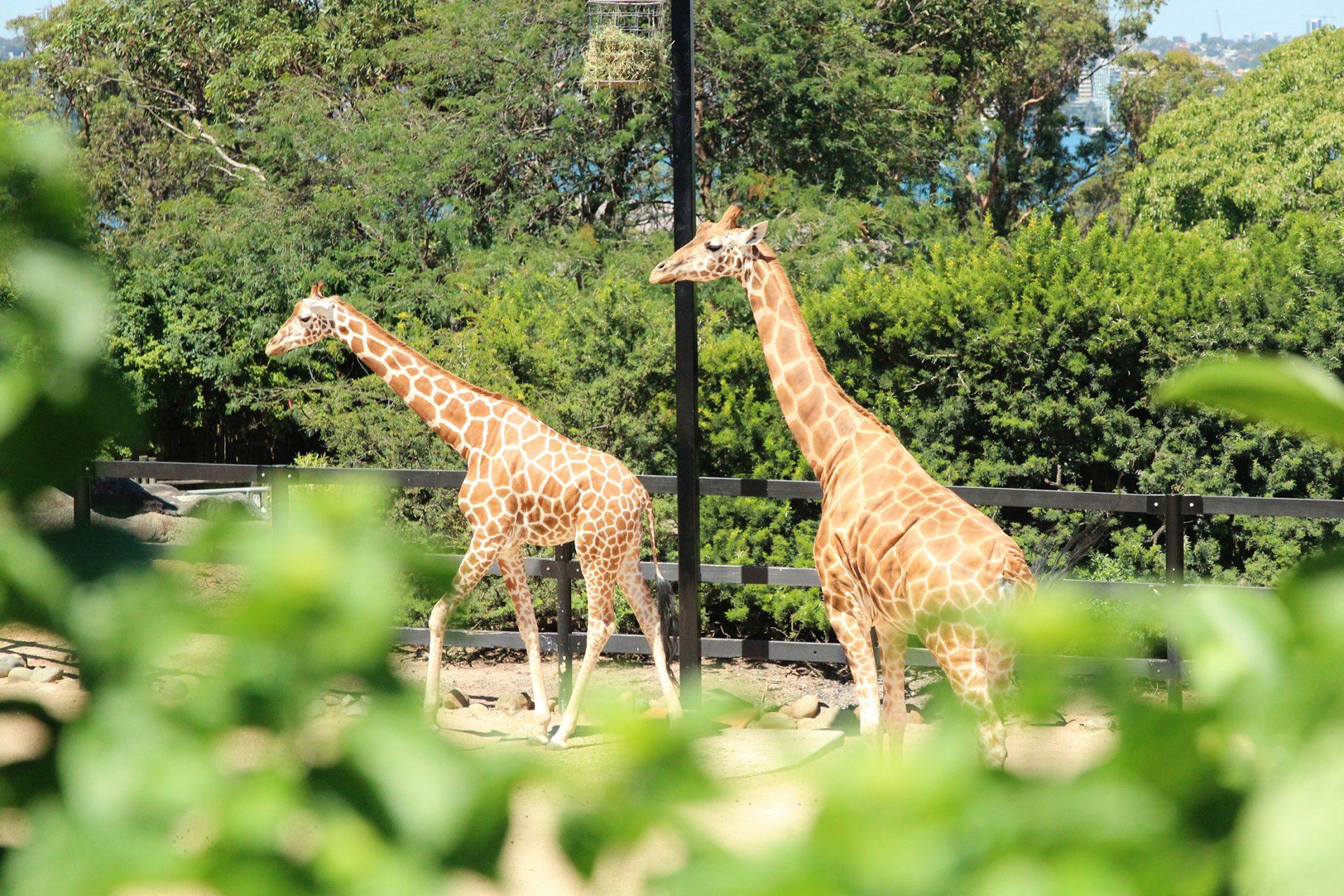 Is Taronga Zoo worth the admission price?