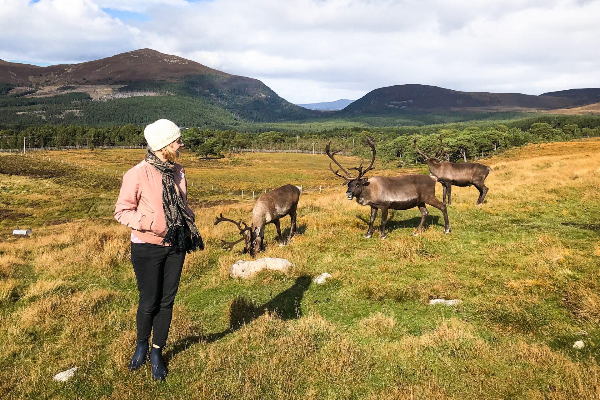 My best ever wildlife adventure: Making friends with reindeer in Scotland