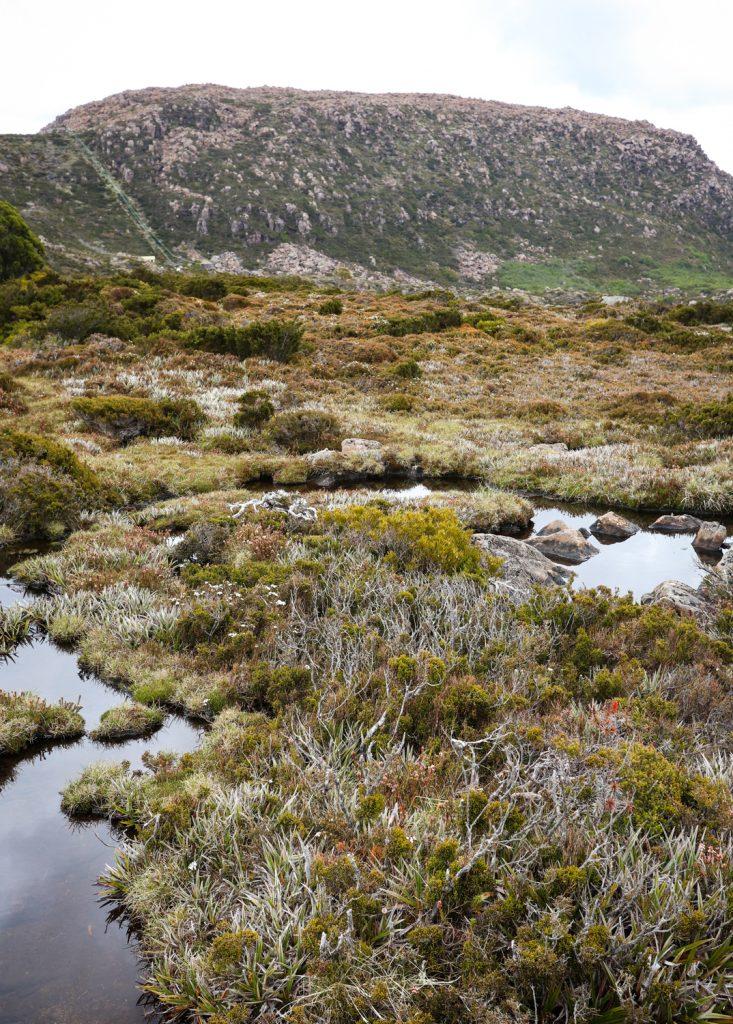 Tarn Shelf track at Mount Field National Park in Tasmania