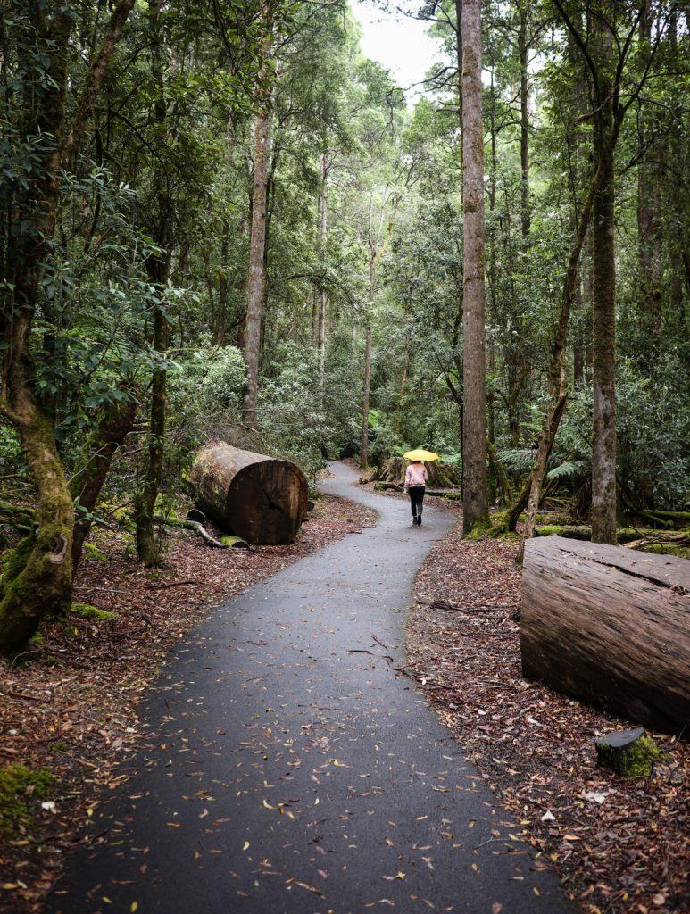 Russell Falls walk at Mt. Field National Park in Tasmania