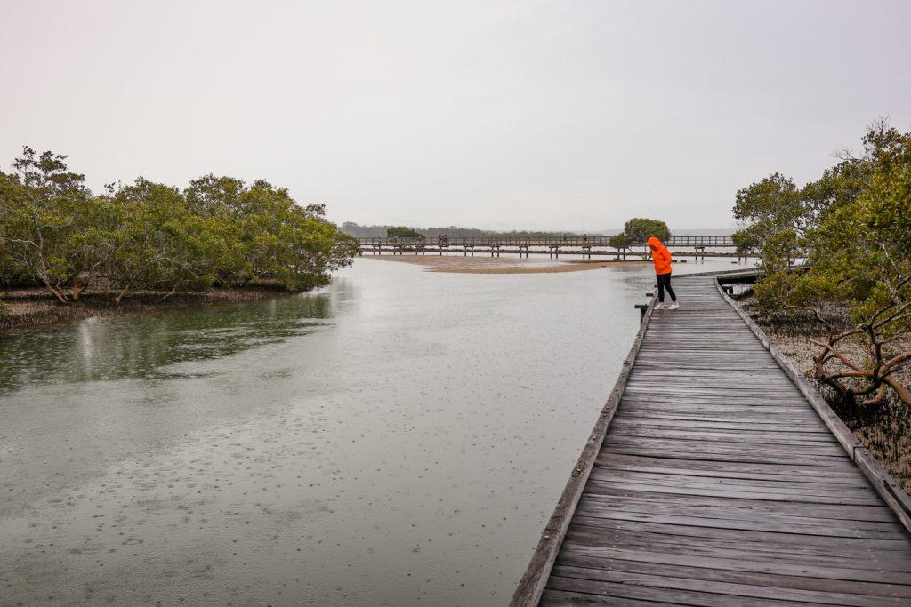 Urunga Wetlands Boardwalk on the NSW North Coast